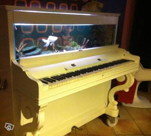 piano-acurio2
