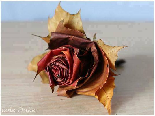 rosa-2