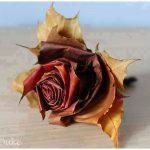 Cómo hacer rosa de otoño con hojas caidas